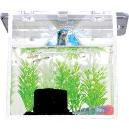 HOLOAQUA Hologram Fishbowl