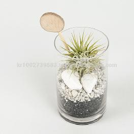 "Vintage Glass Cup Tillandsia Air Plants DIY Set "" Black & White"" Joinflower"