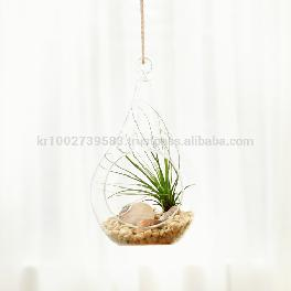 "Air Plants Tillandsia Terrarium Set "" Desert Juncifolia "" by Joinflower Joinfolia"