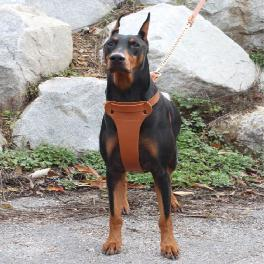 Twist leather harness T type(Big dog)