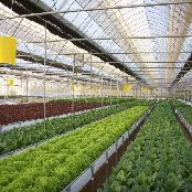 Greenhouse for Agriculture Hydroponics