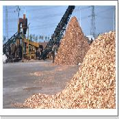Wood chip for Pulp