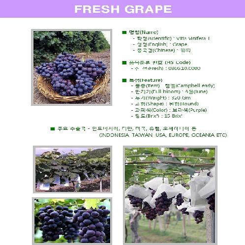 Korean Fresh Grape | Fresh fruit, Fresh Peach, Fresh Watermelon, Fresh Grape