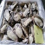 Frozen oyster meat, half-shell, dried, canned, oyster