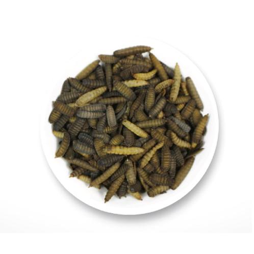 Dried Black Soldier Fly (Hermetia illucens, Phoenix worm) | animal feed, bird feed, animal feed additive, insect, black soldier fly