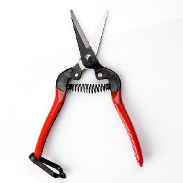 Fruit Shears