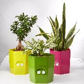 EVERGROW self watering pot, no worry about plant dying even in long trips with easy to drain water