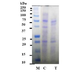 Antibacterial Peptide Microbial(P/WS : Water Soluble)