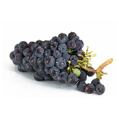 Fresh Grapes (Kyoho, Campbell, Shine Muscat)